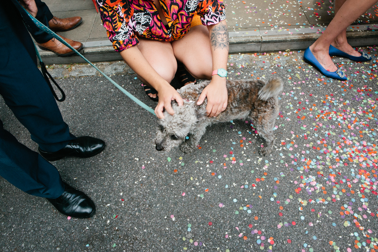 A photo of a dog covered in confetti at a Stoke Newington Town Hall wedding in London by Kent and London alternative wedding photographer Matilda Delves